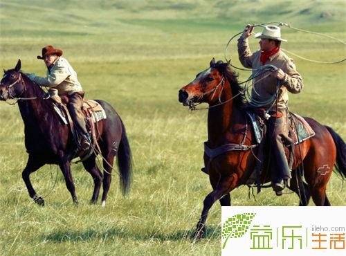 马的全身画法步骤图片